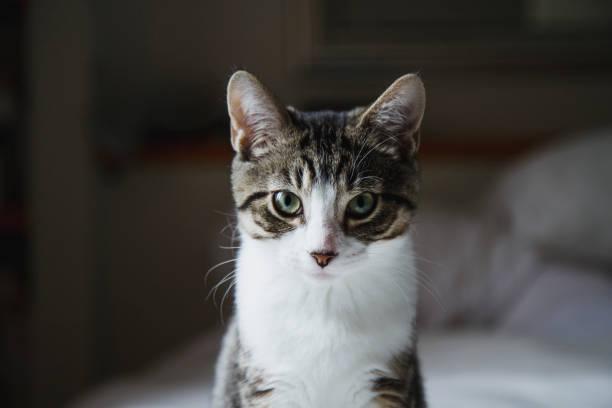 Cute kitten in a bed stock photo
