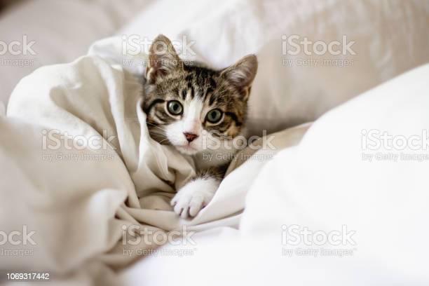 Cute kitten in a bed picture id1069317442?b=1&k=6&m=1069317442&s=612x612&h=hshmmio0flum18piam06dznplepadekhf8k3gafc8vs=