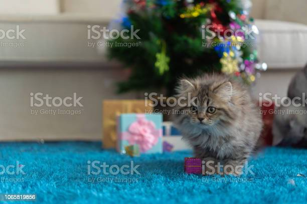 Cute kitten in christmas picture id1065819856?b=1&k=6&m=1065819856&s=612x612&h=n5ynkk yn2aqw2adp4utn lgyighxrcvrthrill3lxe=