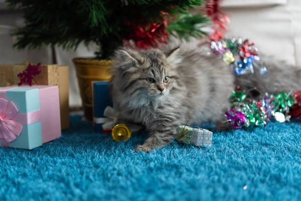 Cute kitten in christmas picture id1065819922?b=1&k=6&m=1065819922&s=612x612&w=0&h=nq31ad4z lb dyvxjjhu2ukdwpndflqru4xv6wajufs=