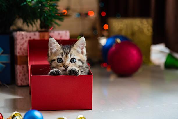 cute kitten in christmas. - katze weihnachten stock-fotos und bilder