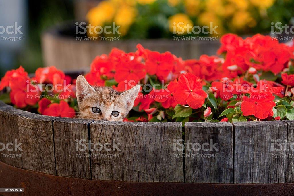 Cute kitten in flowers stock photo