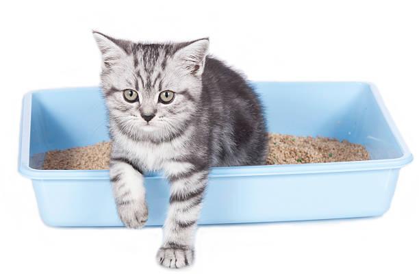 Cute kitten in litter box picture id615615234?b=1&k=6&m=615615234&s=612x612&w=0&h=kyldu0so6voadjzfqnpr9qndjgyvzoeidk6k9zru8ka=