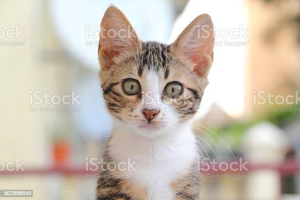 Cute kitten in nature picture id502888545?b=1&k=6&m=502888545&s=612x612&h=kpce0cljltrsa4gobrgzyuzljxioog1mzugm0mzdlk0=