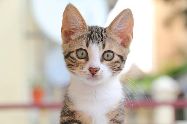 Cute kitten in nature picture id502888545?b=1&k=6&m=502888545&s=612x612&w=0&h=wvjbps90 q1 upfnxjru9zrqj jhe1kkddxu1qbe1d4=