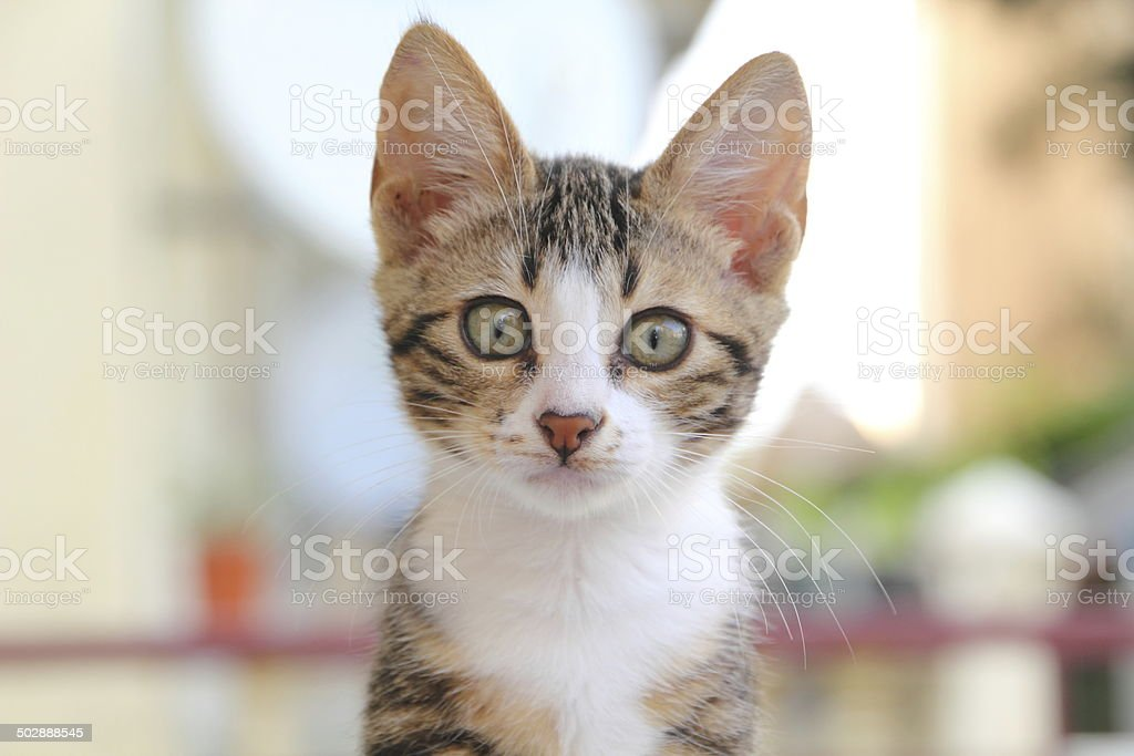 cute kitten in nature stock photo