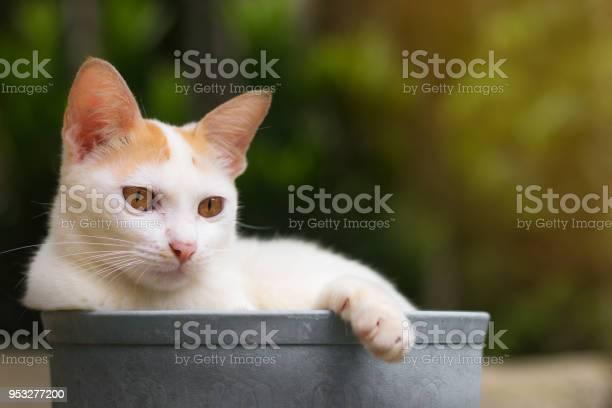 Cute kitten is lying in a plastic bowl picture id953277200?b=1&k=6&m=953277200&s=612x612&h=rdcyfuprbok9mzggouwwh4wvuupkflg7vfrexh 7ggo=