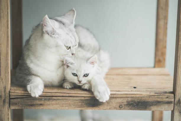 Cute kitten lying picture id656603292?b=1&k=6&m=656603292&s=612x612&w=0&h=rhkqhc8u7gbwc8tghbzifccyovtmzpywura 1qiu0ny=