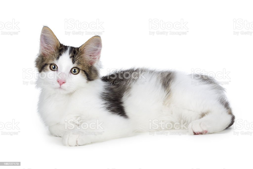 Cute kitten on a white background. royalty-free stock photo