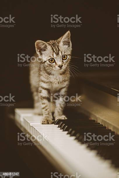 Cute kitten on piano picture id486451242?b=1&k=6&m=486451242&s=612x612&h= ihbvgkpztrt3xvytdeiho lqn0irueon0q2nlvn 9u=