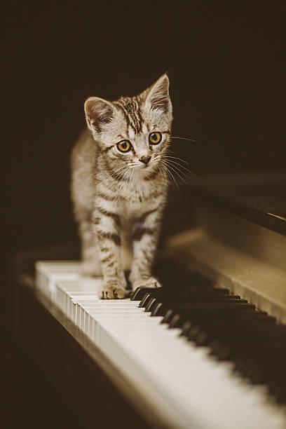 Cute kitten on piano picture id486451242?b=1&k=6&m=486451242&s=612x612&w=0&h=pau4tiunx0hgqi7iezqf8nuarnpdjugqbbn ji ruvk=