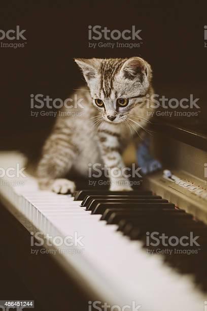 Cute kitten on piano picture id486451244?b=1&k=6&m=486451244&s=612x612&h=4aszsza1keny4ll kldvr9 catu2lppyikzbopd6xzg=