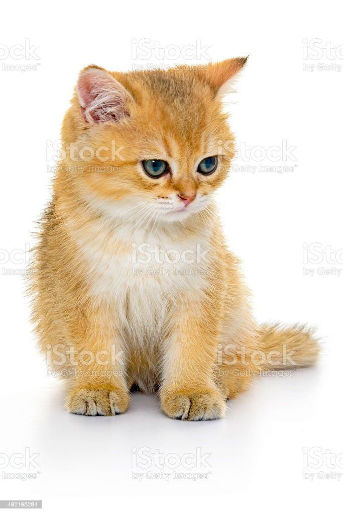 Cute Kitten on white background stock photo
