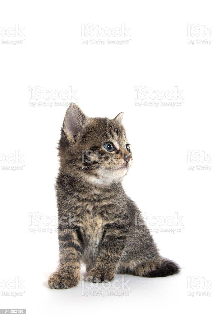 Cute kitten on white stock photo