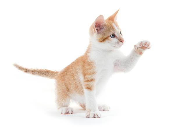 Cute kitten on white picture id619753536?b=1&k=6&m=619753536&s=612x612&w=0&h=b7z7gsavxxcitdzibxjo9qpgzfucsb772voidmkljwm=