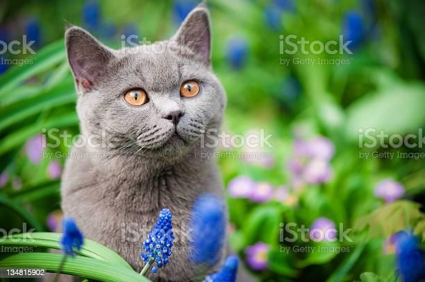Cute kitten oudoors picture id134815902?b=1&k=6&m=134815902&s=612x612&h=x5jh82ag3qanyfcjzz2yhvarpj1adkmakmko9b0ezpq=