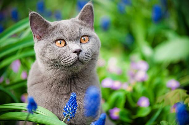 Cute kitten oudoors picture id134815902?b=1&k=6&m=134815902&s=612x612&w=0&h=74ptpeigamlazz7ydbwkqfoibg0morrufk3jn mrbri=