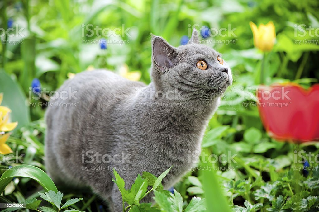Cute kitten oudoors royalty-free stock photo