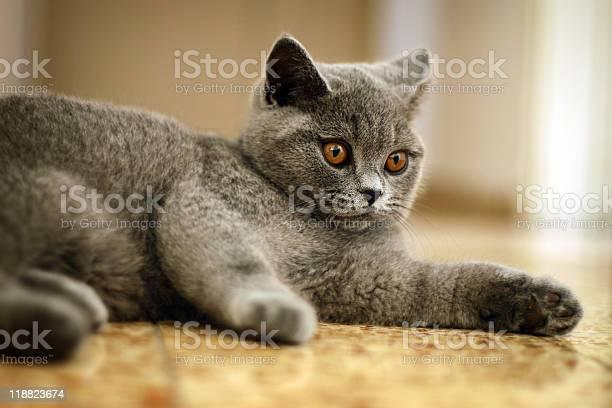 Cute kitten picture id118823674?b=1&k=6&m=118823674&s=612x612&h=crxzz7botxxb es3hcappeyp8tx9 42 kfpkgixx tu=
