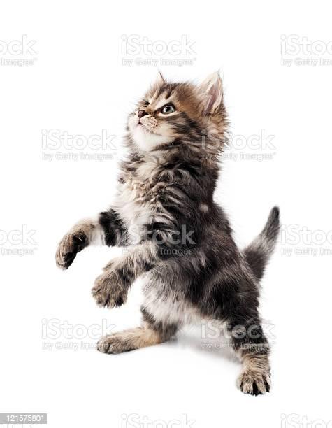 Cute kitten picture id121575801?b=1&k=6&m=121575801&s=612x612&h=5jw 0ybn zf4bawmjzbjbh bk3vbcpdtci7psfisqt0=