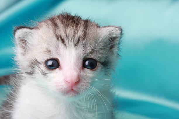 Cute kitten picture id172973835?b=1&k=6&m=172973835&s=612x612&w=0&h=xoxsgmui6xmrb4z9nilzs4qwpuu9z4vfyzddvatx3vi=