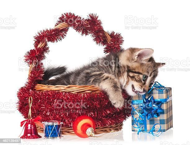 Cute kitten picture id462139497?b=1&k=6&m=462139497&s=612x612&h=hmuvibgri6zryz7rtmkg7qrbkprdnkoamgniv4aneli=