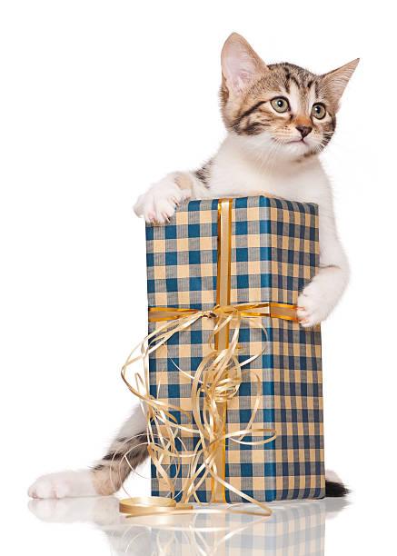 Cute kitten picture id480156909?b=1&k=6&m=480156909&s=612x612&w=0&h=ztkypjmliw21nq09oqiqunywtjnhndshqmgf0caxu9y=