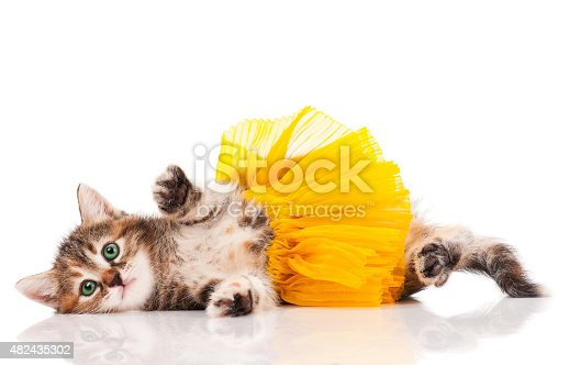 Cute kitten dressed in the tutu having a rest over white background