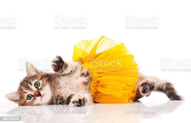 Cute kitten picture id482435302?b=1&k=6&m=482435302&s=612x612&h=utmana4atxlh5dycpvjewxhrbp xdmcmte5k7ajuxx0=