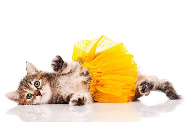 süße kätzchen - flippige outfits stock-fotos und bilder