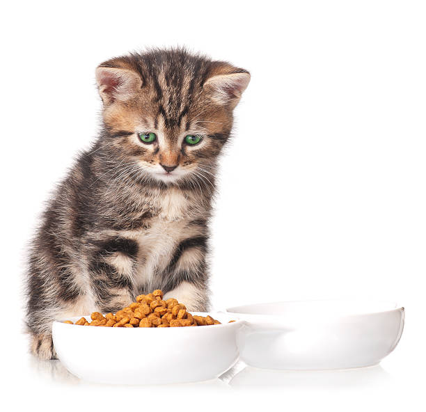 Cute kitten picture id482573772?b=1&k=6&m=482573772&s=612x612&w=0&h=4tisrv1sdgeytw2hlfvi2hxywho3ckhpf3pn1ukvbqo=