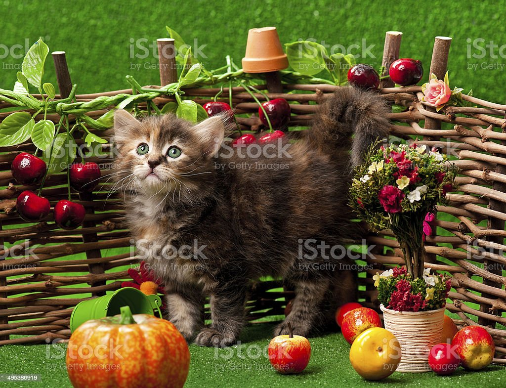 Cute kitten royalty-free stock photo