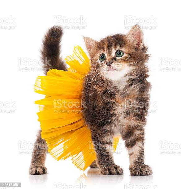 Cute kitten picture id498171681?b=1&k=6&m=498171681&s=612x612&h=lex0mxeztlbgt8okm8hsoccbyhfumne1hmwxddkhwem=