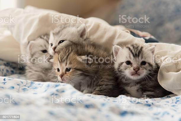 Cute kitten picture id501771804?b=1&k=6&m=501771804&s=612x612&h=p7oh1rj 0rrtun5bcdobt xnfswft5bckw0a7y5bi5q=