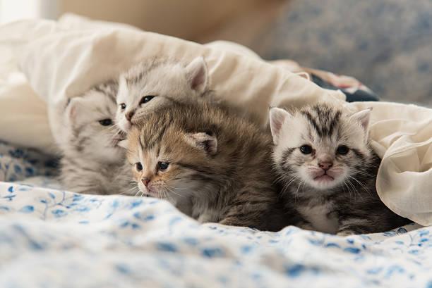 Cute kitten picture id501771804?b=1&k=6&m=501771804&s=612x612&w=0&h=smbdwzd5tgjzibno y xxklb5kiwga6dyqv4e hycqu=