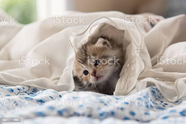 Cute kitten picture id501771882?b=1&k=6&m=501771882&s=612x612&h=fmf6akmbdpqazqcmum5ru4n0d nqqmwlfvsodvr1joa=
