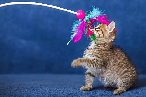 Cute kitten picture id505046535?b=1&k=6&m=505046535&s=612x612&w=0&h=pjmr6dgue6snmudma5unrdrzbcqbjfginchvpnofiya=