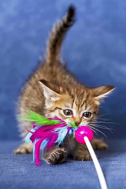 Cute kitten picture id505046545?b=1&k=6&m=505046545&s=612x612&w=0&h=jc8hjeifh8hgzhvcdzxuaapxdif9sr5v wts6mecxb4=