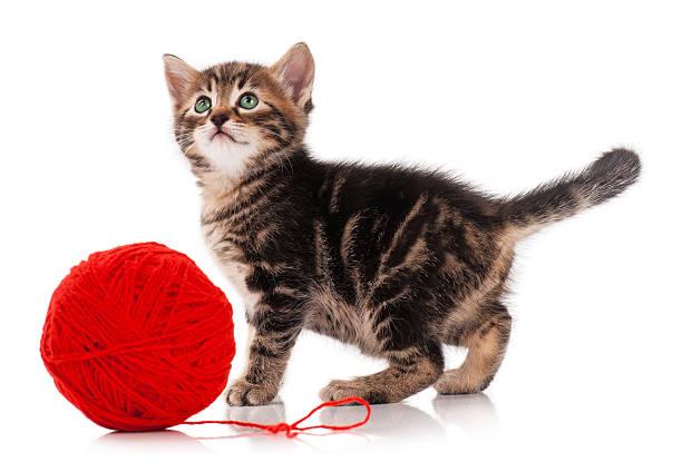 Cute kitten picture id533038868?b=1&k=6&m=533038868&s=612x612&w=0&h=hqzw5hyhsnuitqlyuixrizbi9rfn3lmxkxs463tcayo=