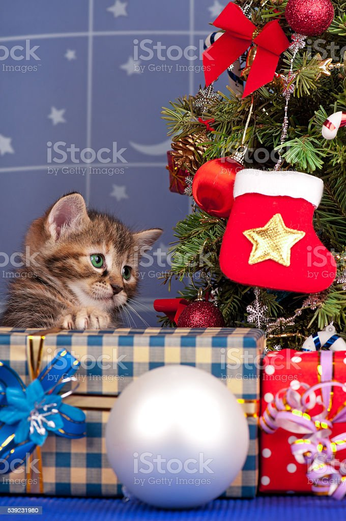 Filhote de gato bonito  foto royalty-free