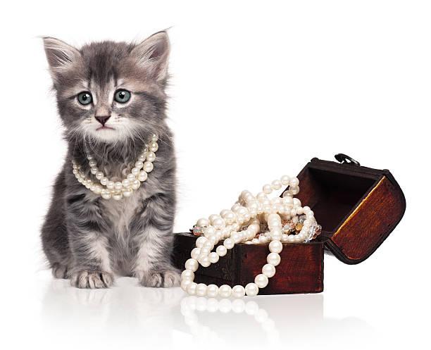Cute kitten picture id539232512?b=1&k=6&m=539232512&s=612x612&w=0&h=fksil8q0vptd01r16dbrjuhnzc3h36s2yipzh0c4bvi=