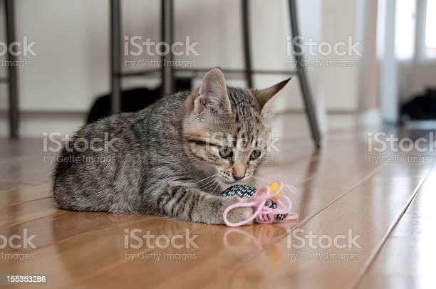 Cute kitten plays with toy mouse picture id155353286?b=1&k=6&m=155353286&s=612x612&h=vqsvj8024fubeilzmrobrxztvhkrcsp51pf4iewryeu=
