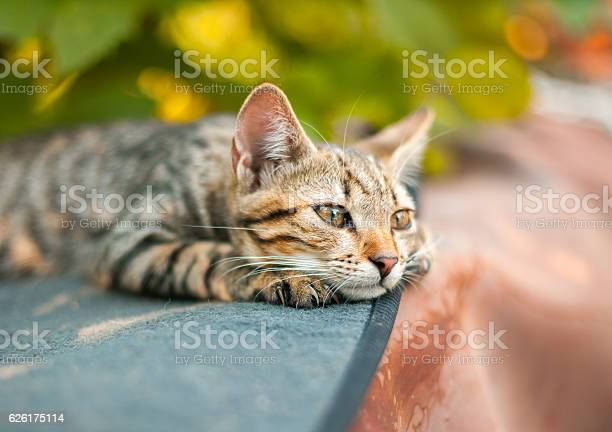 Cute kitten relaxing in the garden picture id626175114?b=1&k=6&m=626175114&s=612x612&h=izokn7 lbcaatkv dpg1maskuaqtdj4wh78zkgdwmdo=