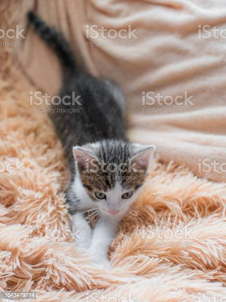 Cute kitten resting on sofa at home top view picture id1043479714?b=1&k=6&m=1043479714&s=612x612&h=qad2ycleee1mlwpi6vqlqyjb8dwnxmwhs6yjnwzrjsa=
