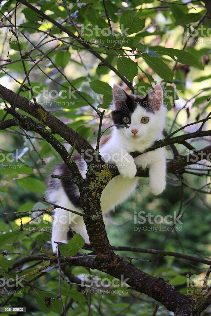 Cute kitten resting on the tree branch stock photo