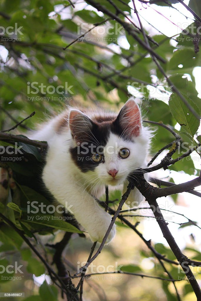 Cute kitten resting on the tree branch stock photo