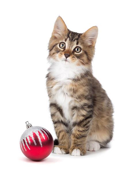 Cute kitten sitting next to a christmas ornament on white picture id452705033?b=1&k=6&m=452705033&s=612x612&w=0&h=c6x5gsscsowmiw bj8brqcnz0lchu78pyprr2wli2gq=