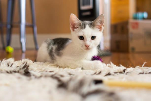 Nettes Kätzchen sitzt auf einem Teppich – Foto