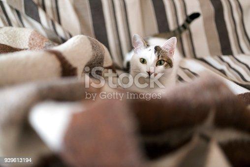 Cute kitten stalking behind the blanket. Photo taken in an authentic apartment in Varna, Bulgaria.