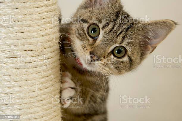 Cute kitten staring wide eyed at the camera picture id172857981?b=1&k=6&m=172857981&s=612x612&h=5w0s 5hhzhtqmn1ujygp6ml11hwkhvsw9wmm 5mh1iw=